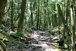 富士山学レンジャー養成講座のポイント1