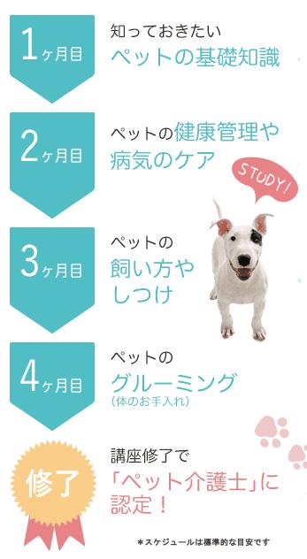 ペット資格取得までのスケジュール
