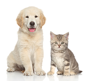 ペット介護士の資格が取れます