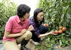 野菜コーディネーター養成講座のポイント4